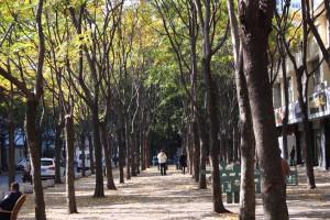樹影蔭蔭的上海